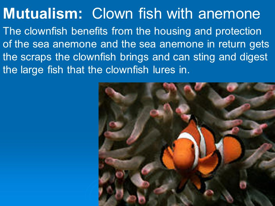 sea anemone and clownfish relationship commensalism animals