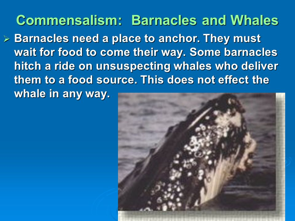whale and barnacles relationship problems