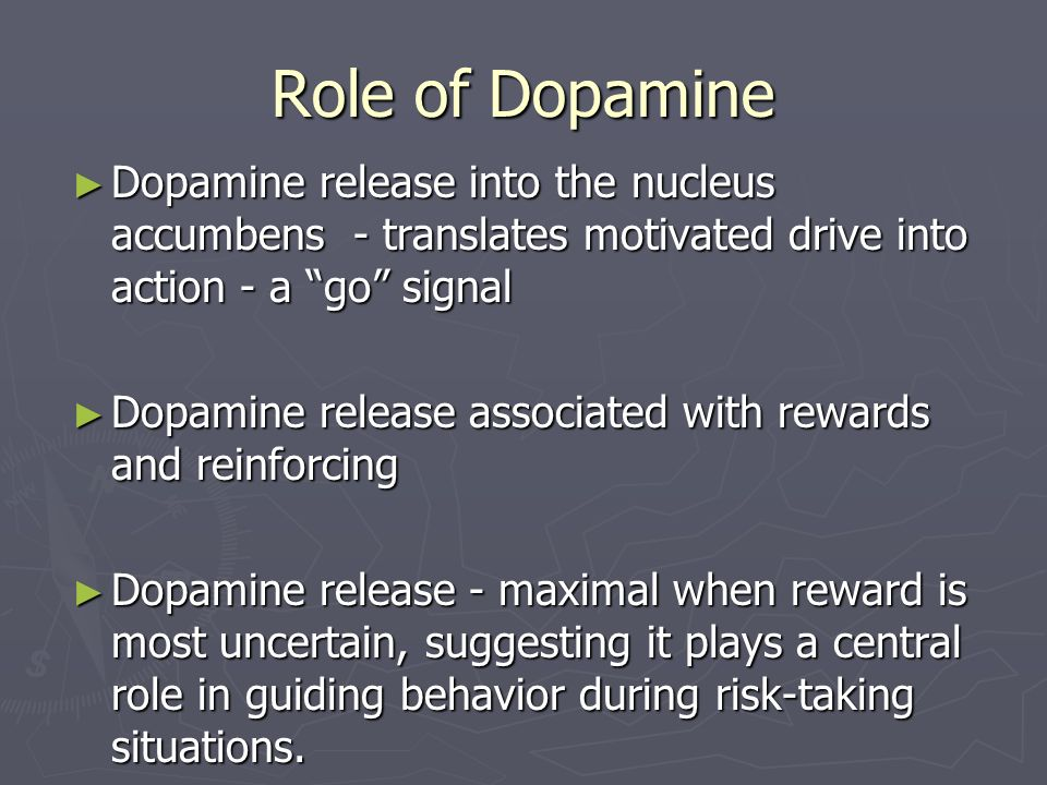 Role of Dopamine Dopamine release into the nucleus accumbens - translates motivated drive into action - a go signal.