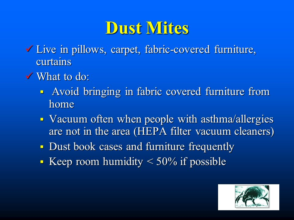Dust Mites Live in pillows, carpet, fabric-covered furniture, curtains