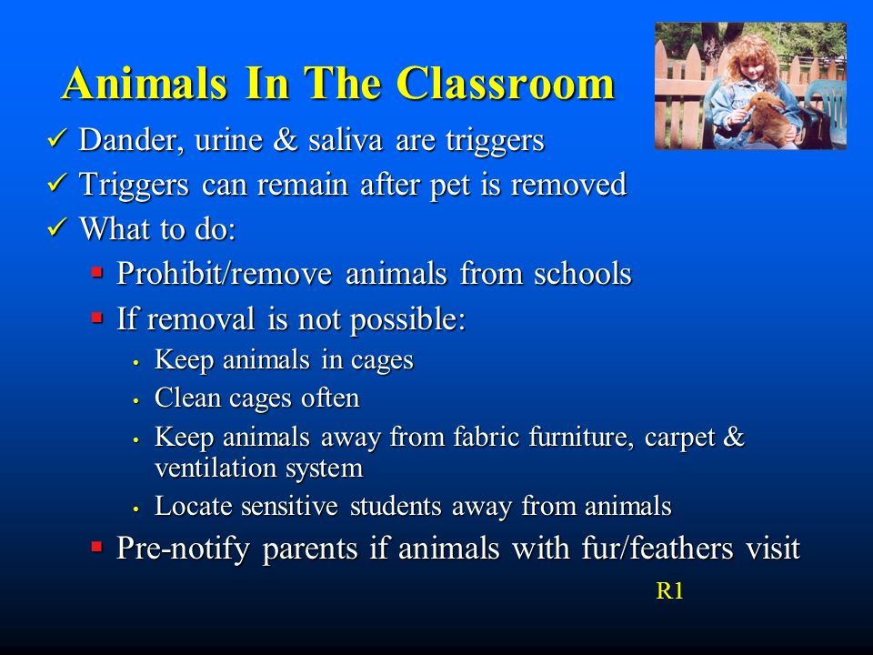 Animals In The Classroom