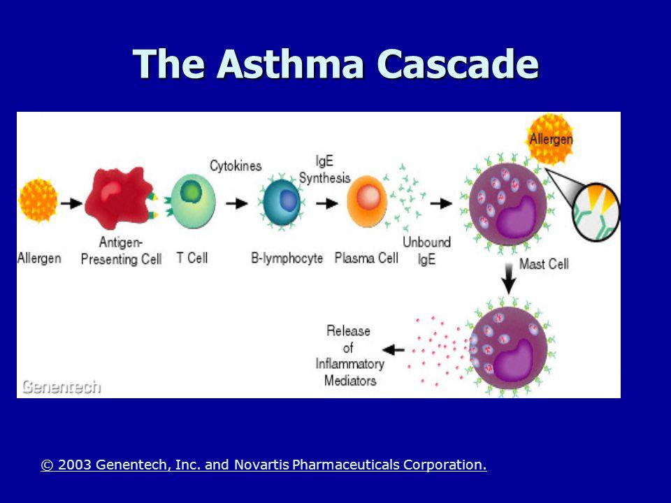 The Asthma Cascade The Immune System Response -The asthma Cascade.