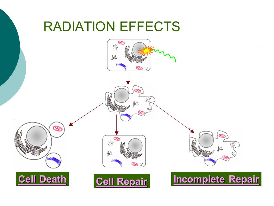 RADIATION EFFECTS Cell Death Incomplete Repair Cell Repair