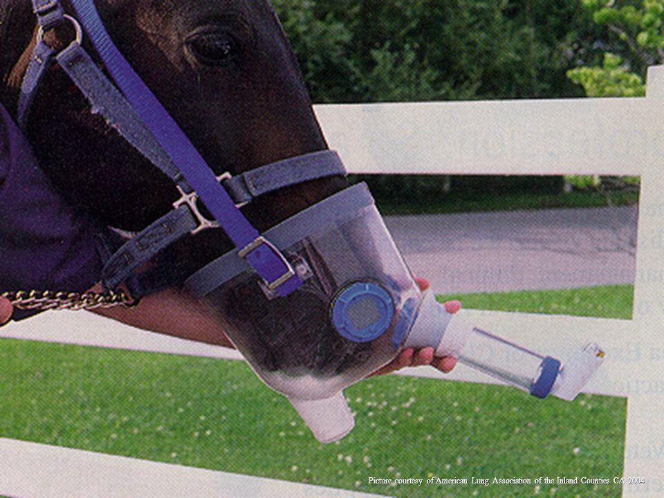 Yep, this horse needed an inhaler treatment after a race-!