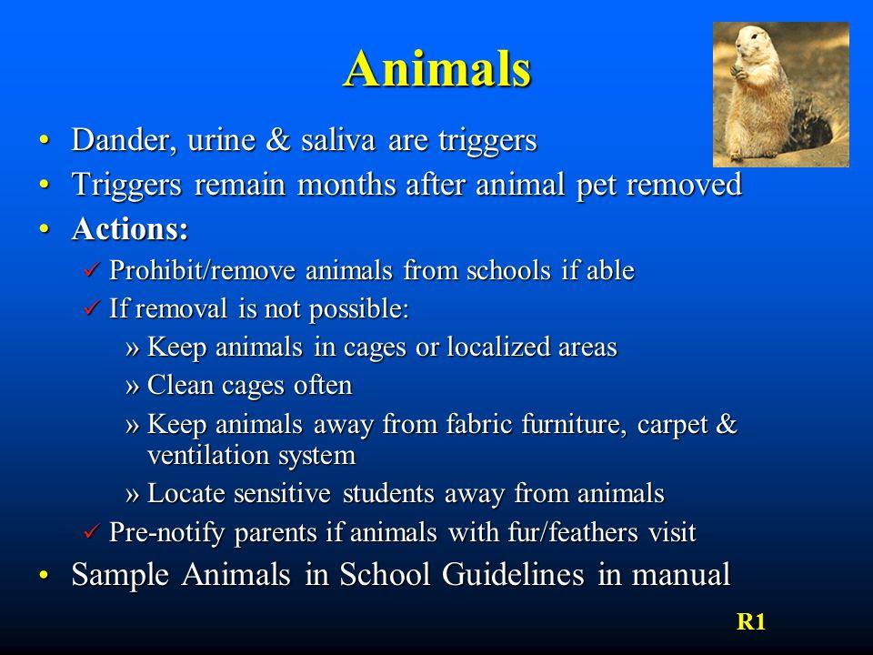Animals Dander, urine & saliva are triggers