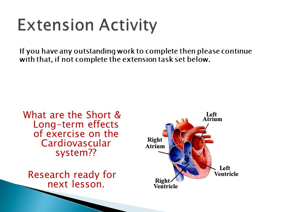 effects exercise cardiovascular system essay Strong essays: the effects of exercise on recovery time the effect of exercise on heart rate the human circulatory system function is to.