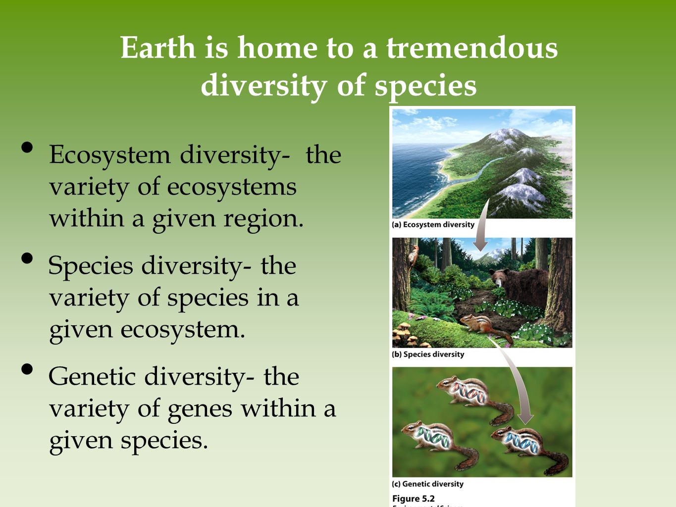 biomes and diversity 2 essay Essay on biodiversity essay contents:  various kinds of biomes are distinguished  2 to preserve biological diversity 3.
