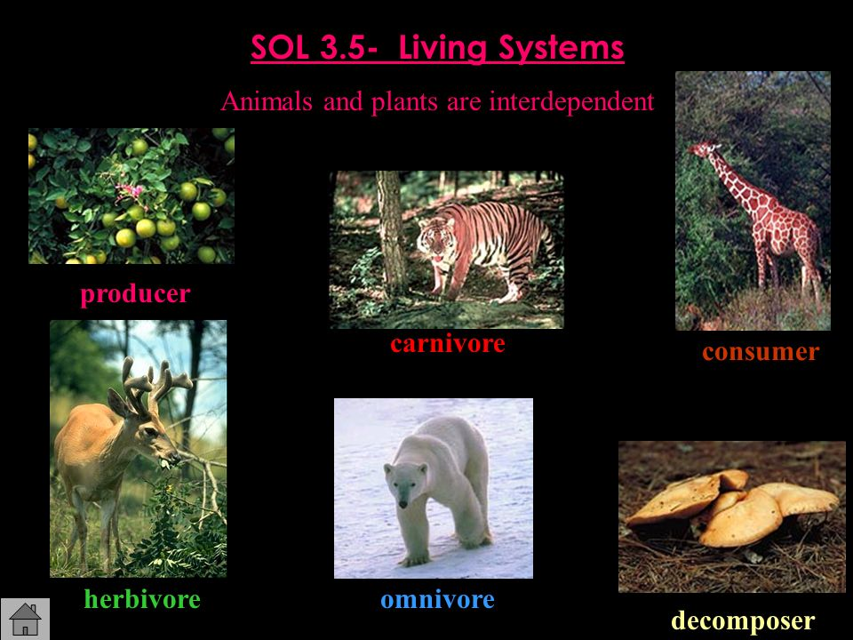 Animals and plants are interdependent