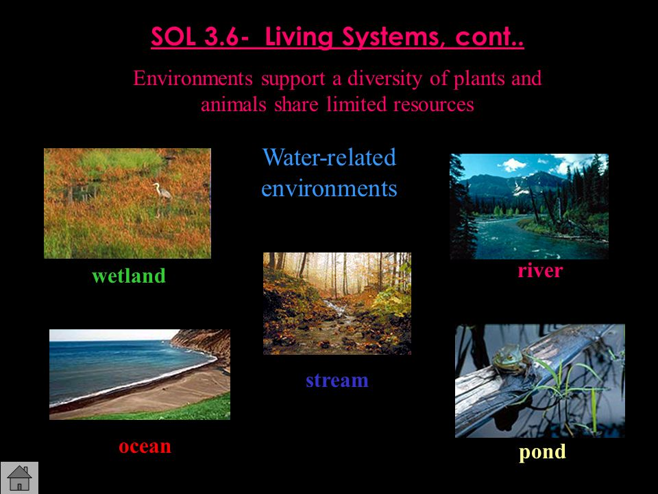 SOL 3.6- Living Systems, cont..