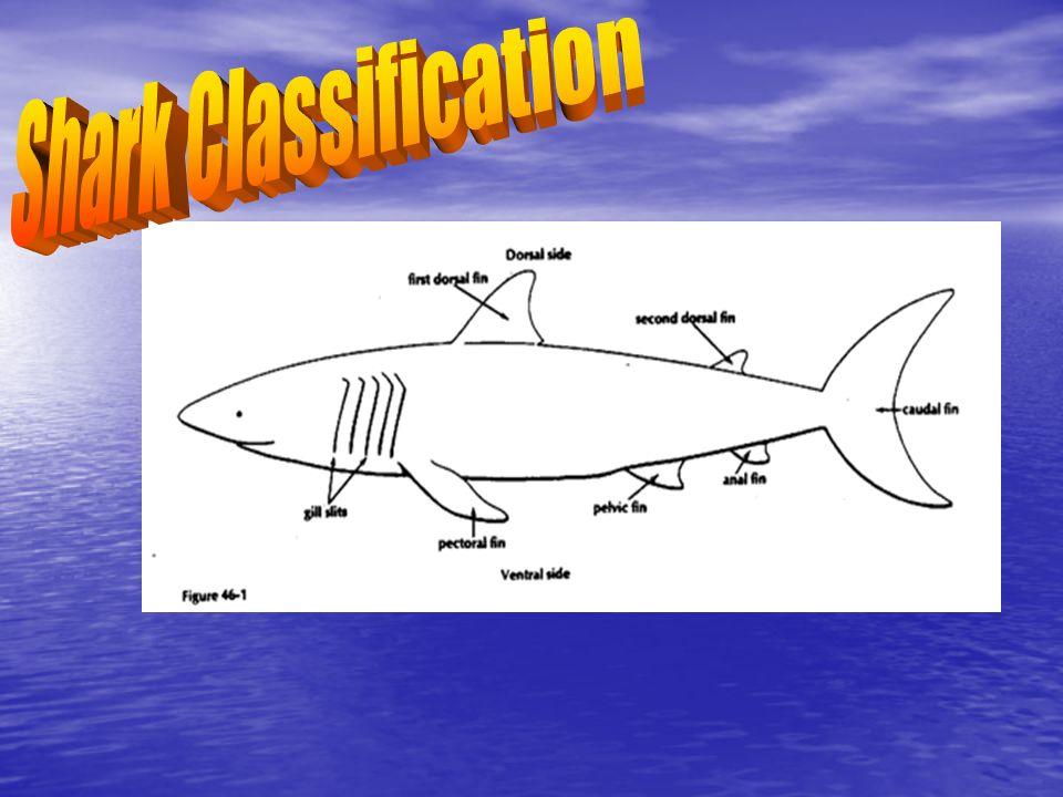 Shark Classification