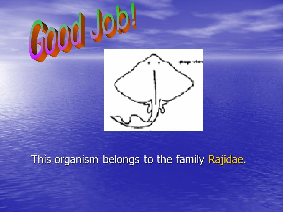 Good Job! This organism belongs to the family Rajidae.