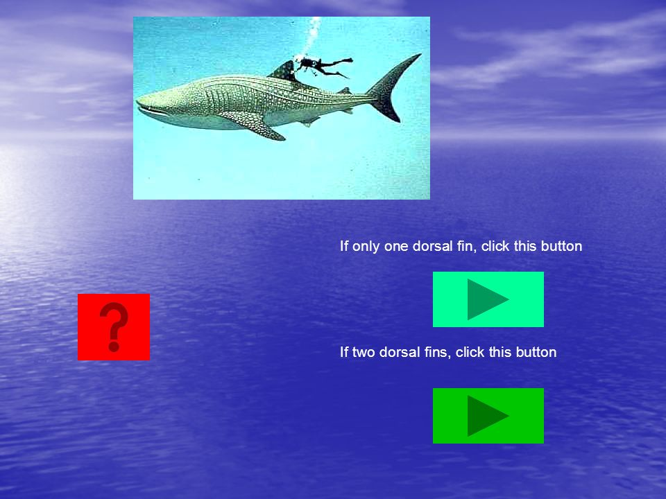 If only one dorsal fin, click this button
