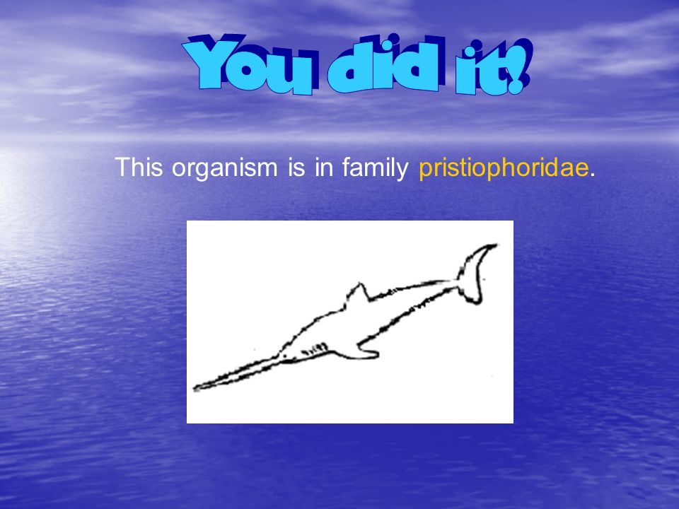 You did it! This organism is in family pristiophoridae.