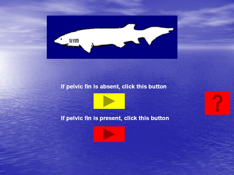 If pelvic fin is absent, click this button