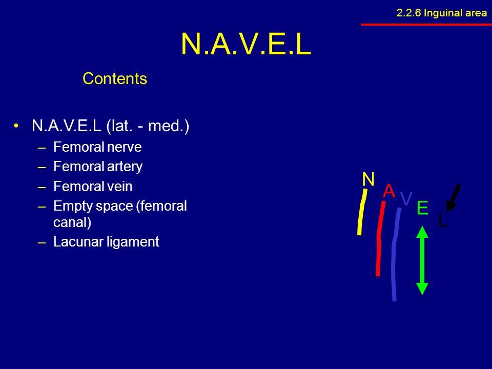 2.1 surface anatomy 2.2 anterior abdominal wall - ppt download, Muscles