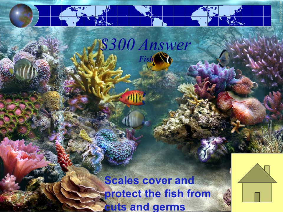 $300 Answer Fish Scales cover and protect the fish from cuts and germs