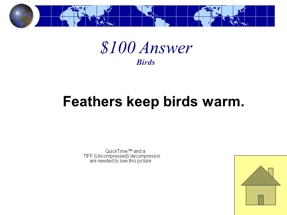 $100 Answer Birds Feathers keep birds warm.