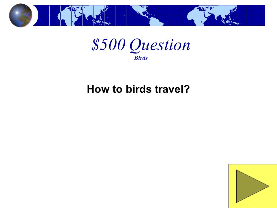 $500 Question Birds How to birds travel