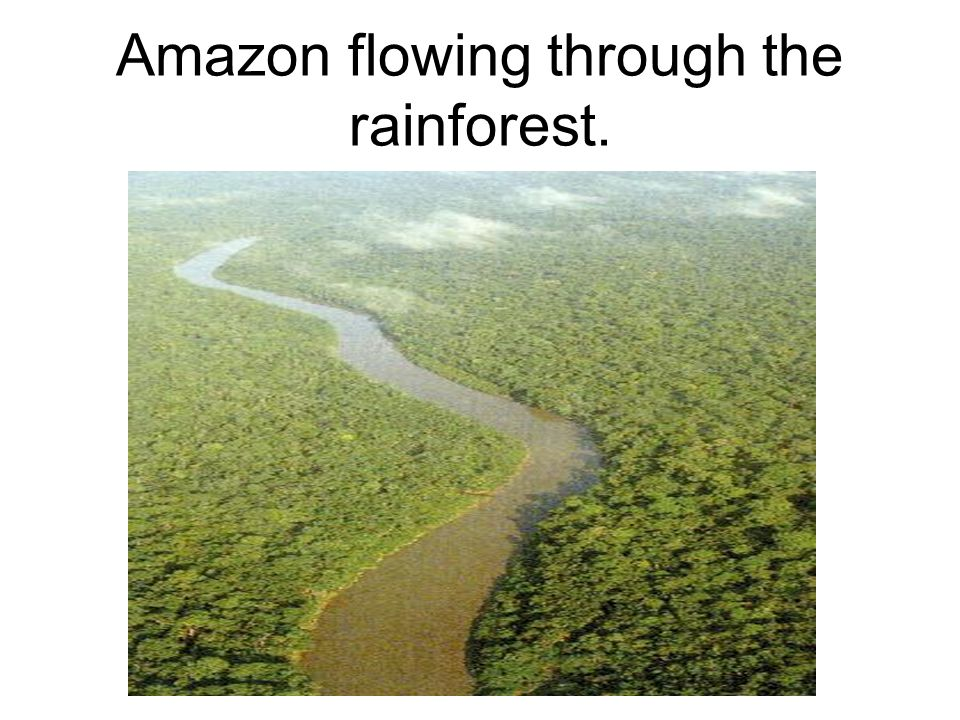 Amazon flowing through the rainforest.