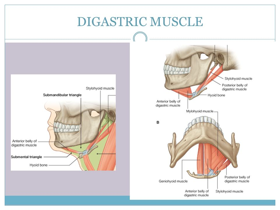 Cervical Spine Muscles Muscluar triangles of ...