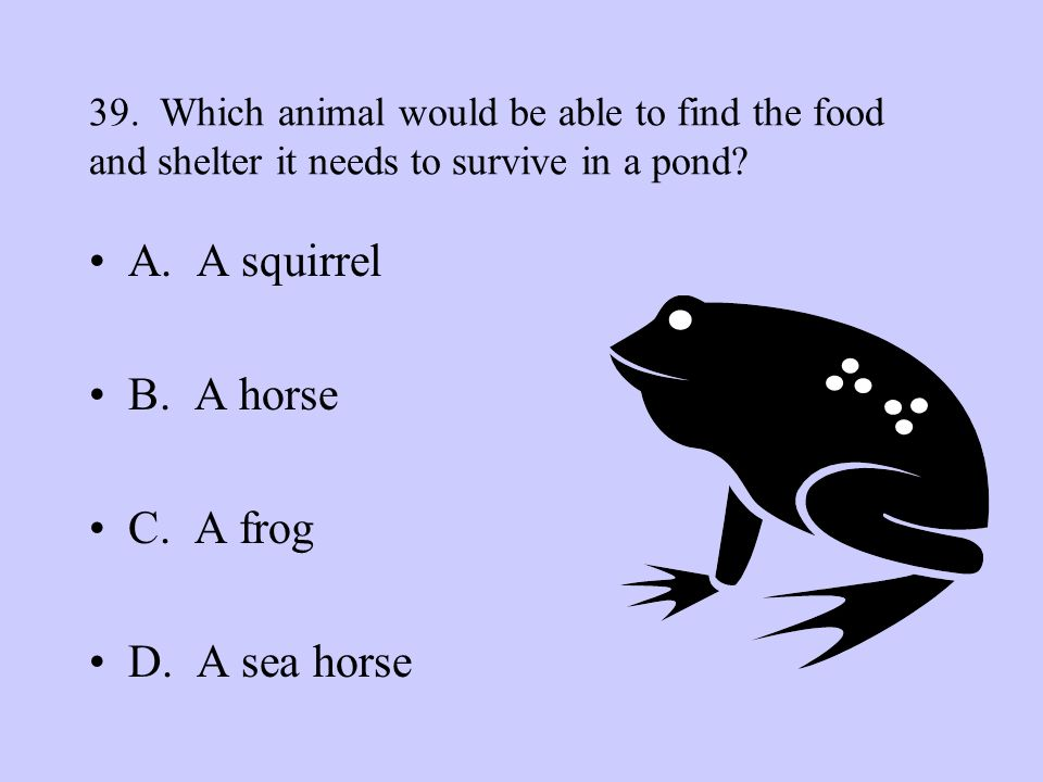 A. A squirrel B. A horse C. A frog D. A sea horse