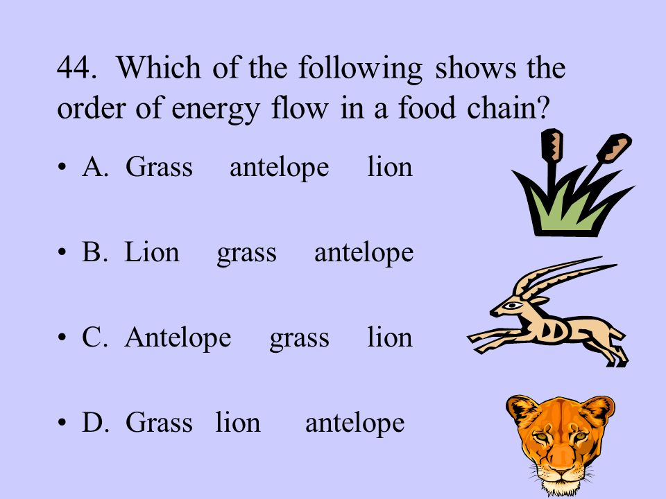 44. Which of the following shows the order of energy flow in a food chain