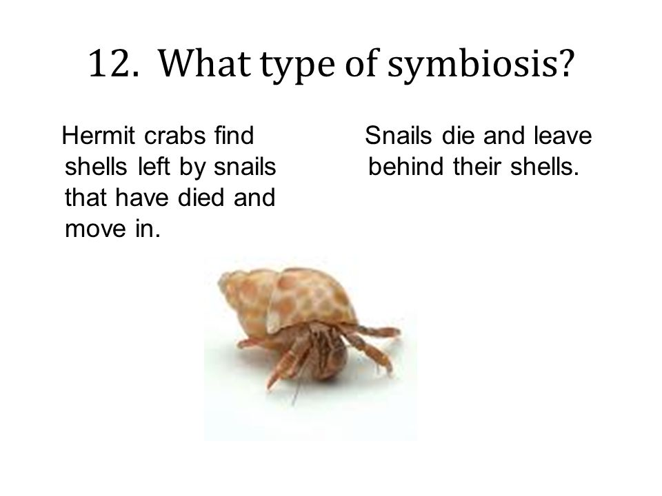 Good Buddies ppt download – Types of Symbiosis Worksheet