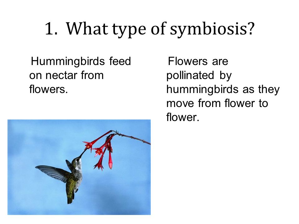 hummingbird and flower symbiotic relationship