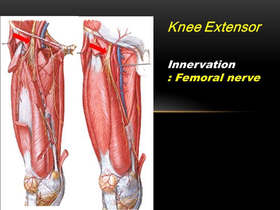 anatomy workshop pelvis & hip & thigh myology. - ppt download, Muscles