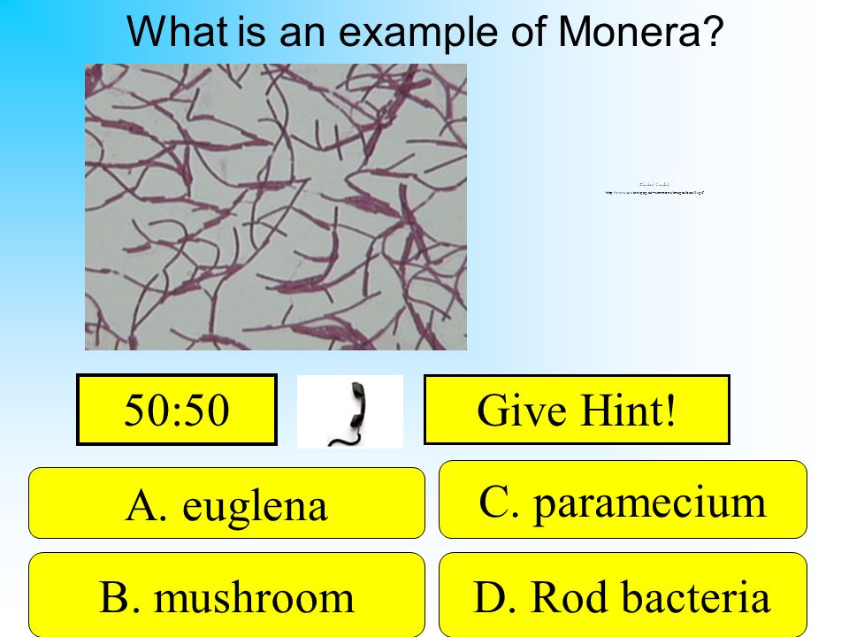 What is an example of Monera