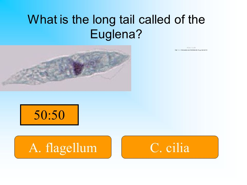 What is the long tail called of the Euglena