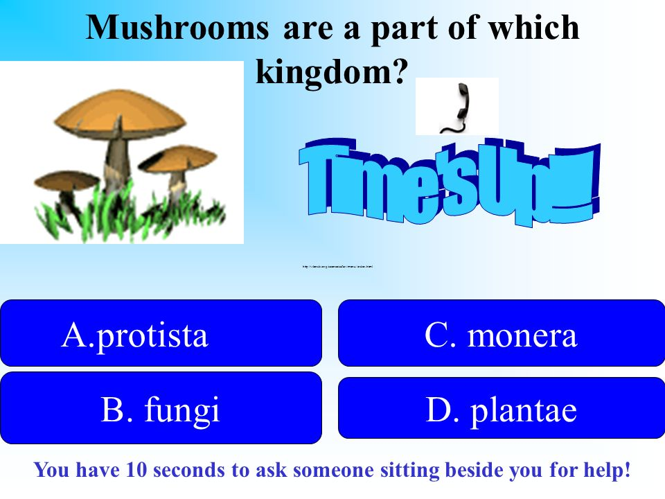 Mushrooms are a part of which kingdom