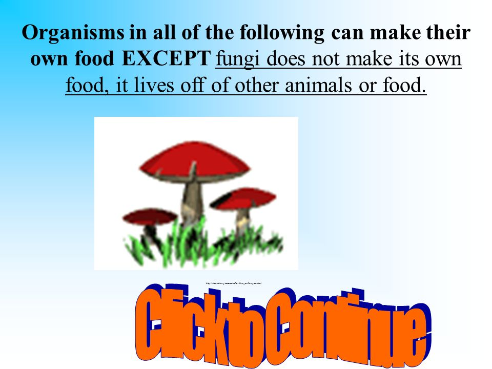 Organisms in all of the following can make their own food EXCEPT fungi does not make its own food, it lives off of other animals or food.