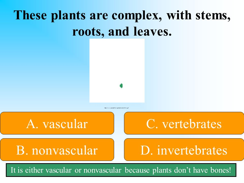 These plants are complex, with stems, roots, and leaves.