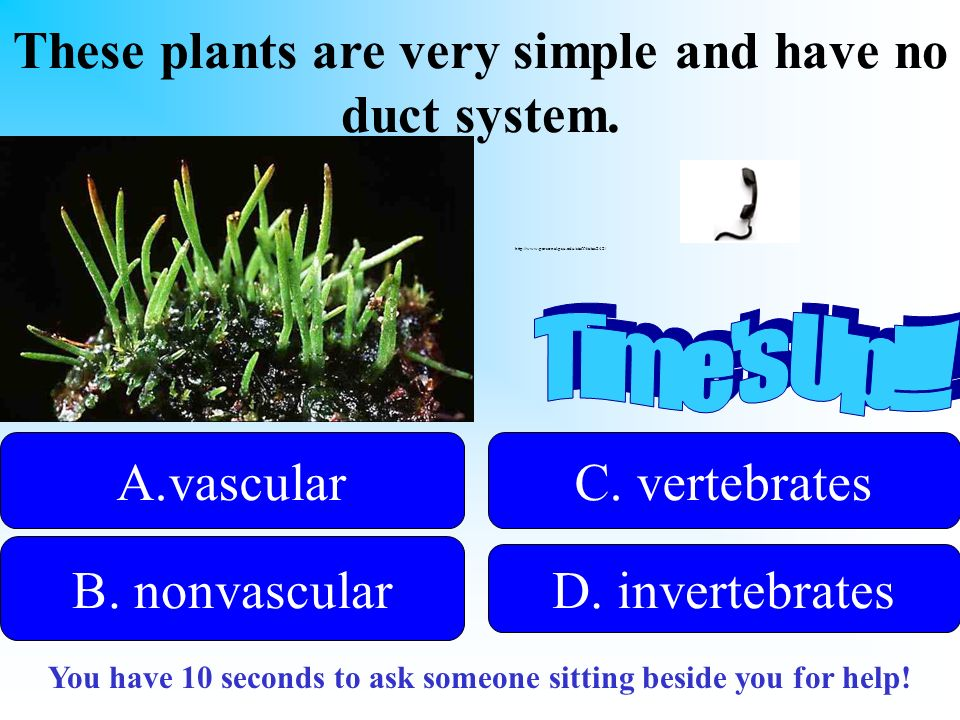 These plants are very simple and have no duct system.