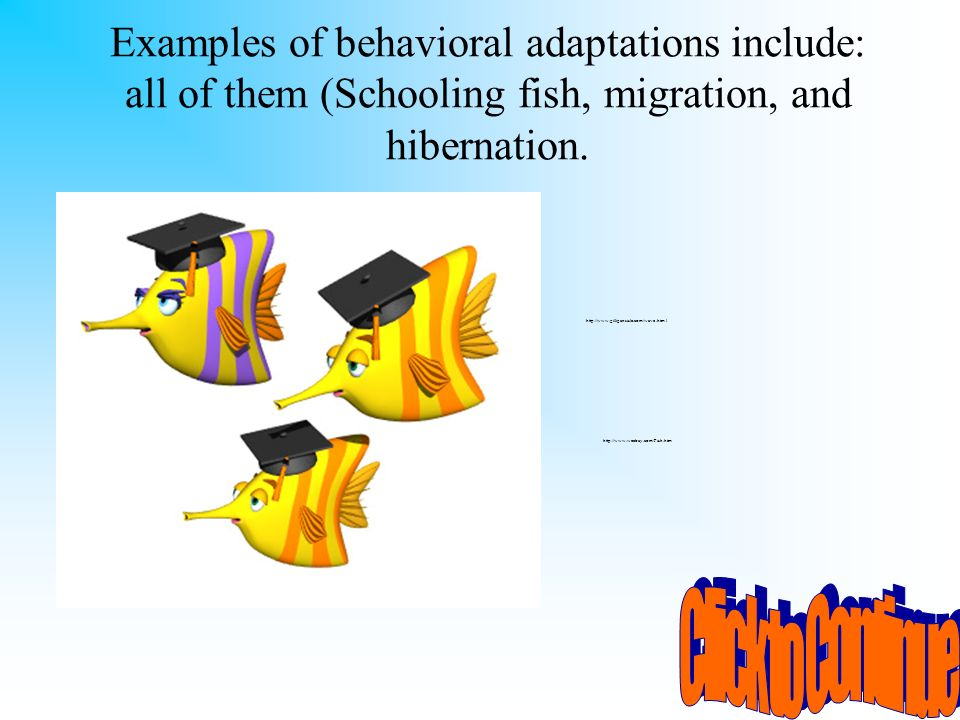 Examples of behavioral adaptations include: all of them (Schooling fish, migration, and hibernation.