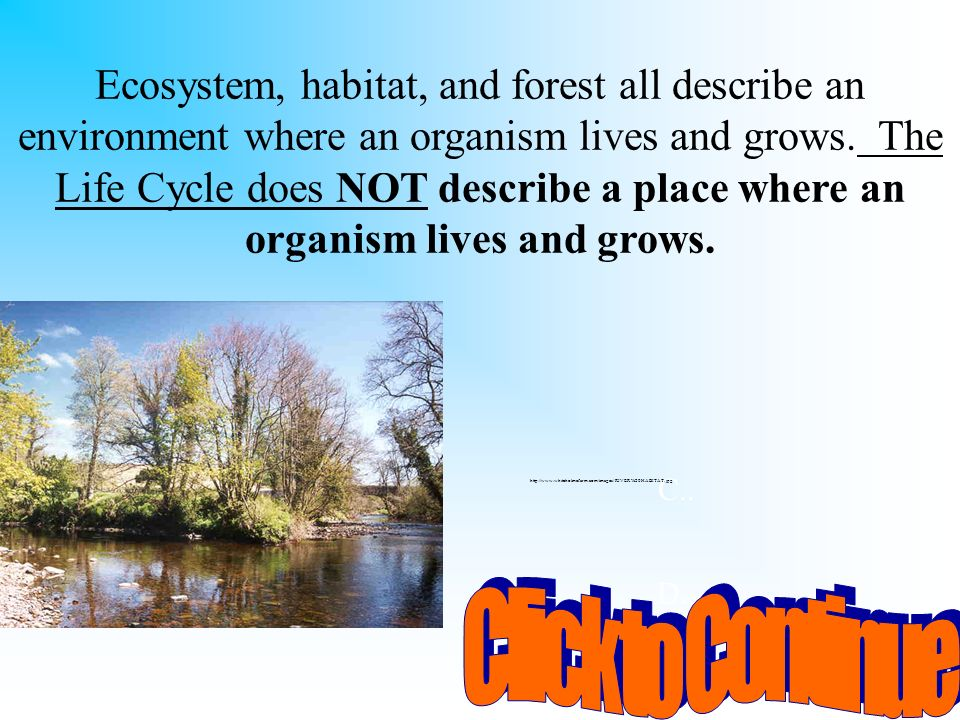 Ecosystem, habitat, and forest all describe an environment where an organism lives and grows. The Life Cycle does NOT describe a place where an organism lives and grows.