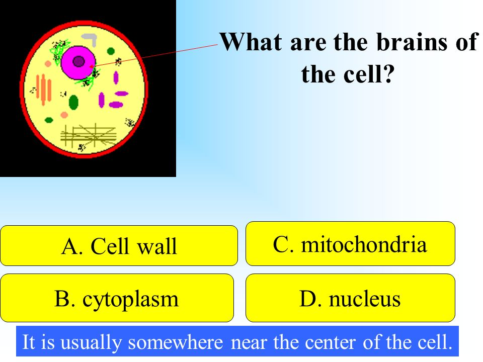 What are the brains of the cell