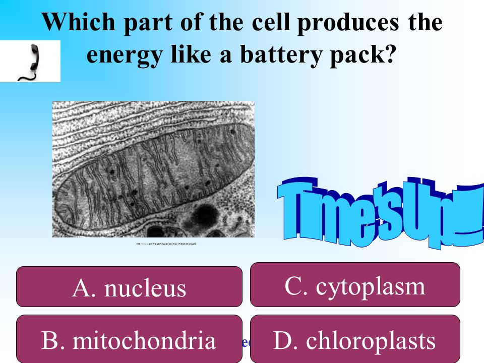 Which part of the cell produces the energy like a battery pack