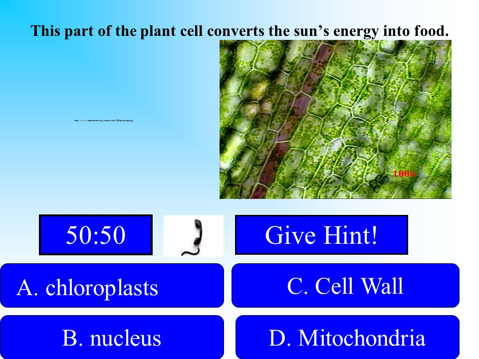 This part of the plant cell converts the sun's energy into food.