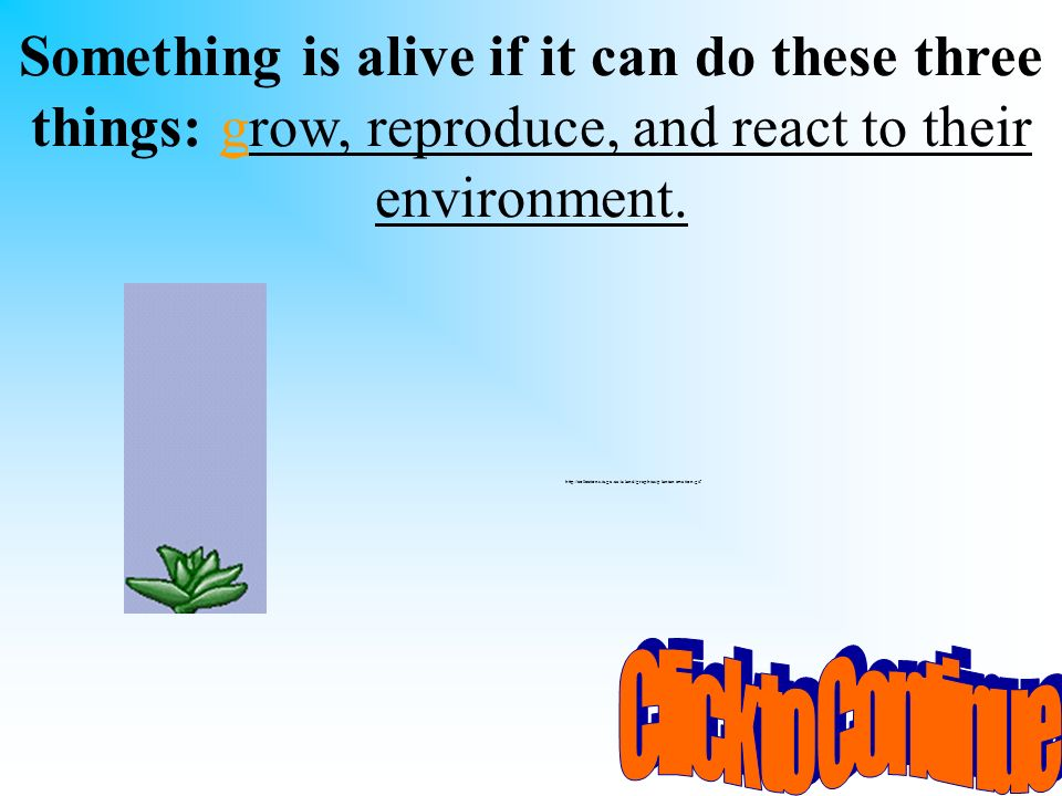 Something is alive if it can do these three things: grow, reproduce, and react to their environment.
