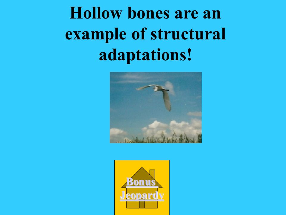 Hollow bones are an example of structural adaptations!