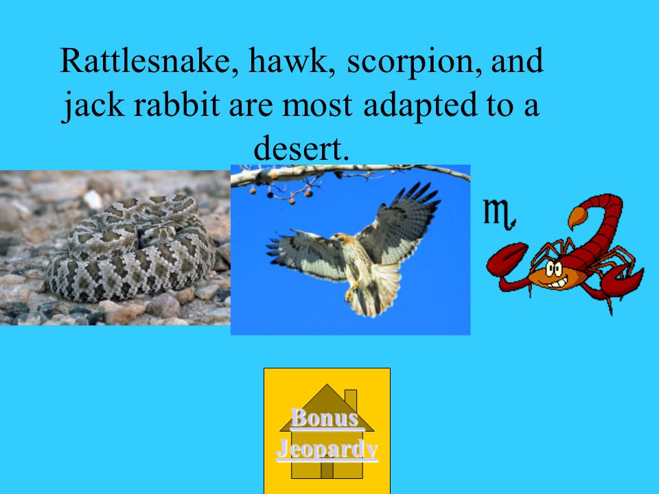 Rattlesnake, hawk, scorpion, and jack rabbit are most adapted to a desert.