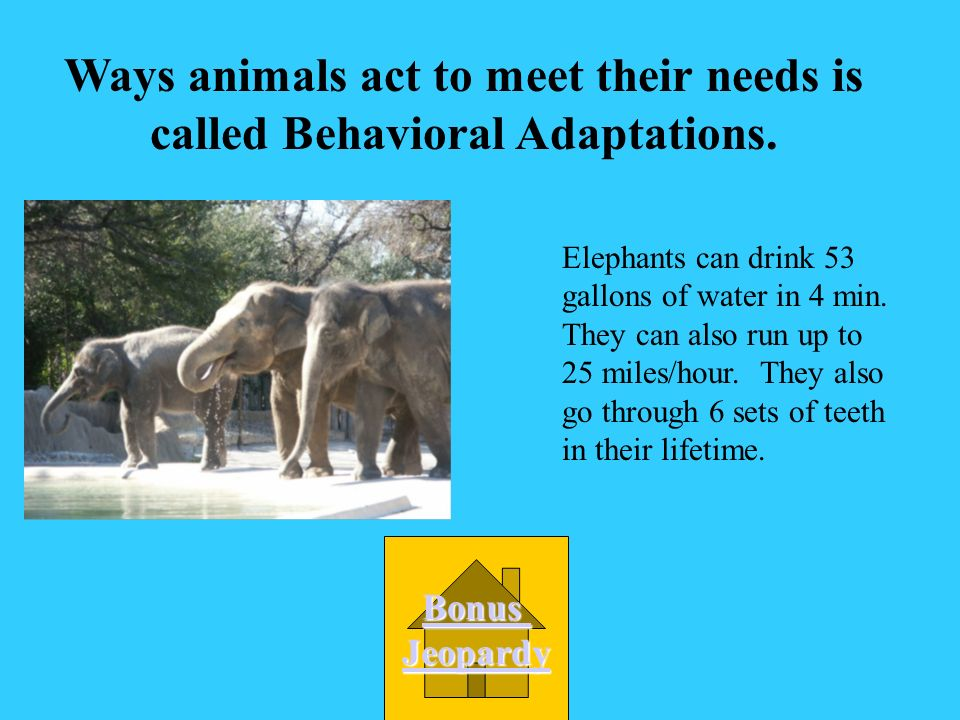 Ways animals act to meet their needs is called Behavioral Adaptations.