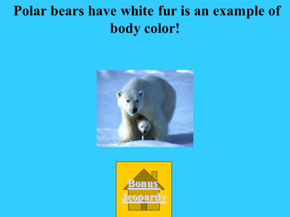 Polar bears have white fur is an example of body color!