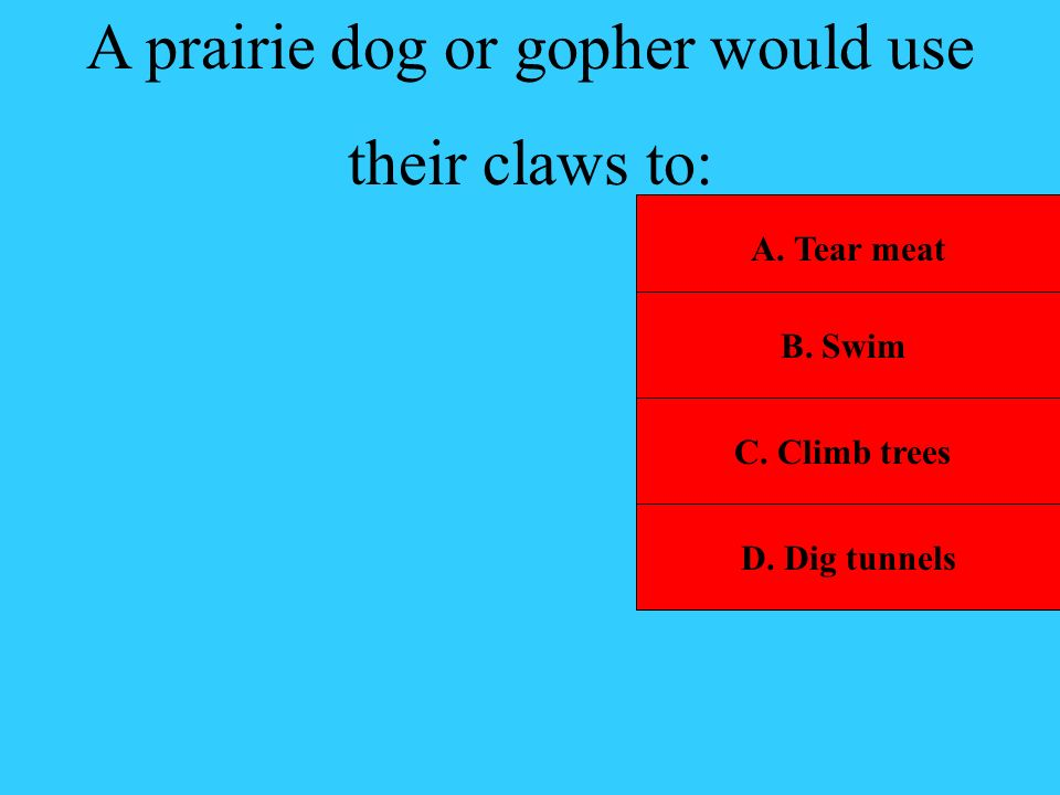A prairie dog or gopher would use