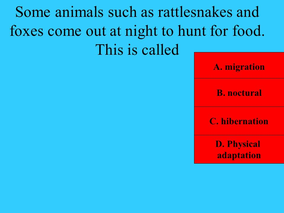 Some animals such as rattlesnakes and foxes come out at night to hunt for food. This is called