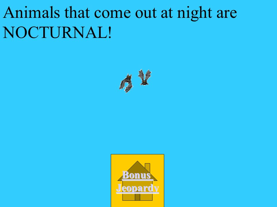 Animals that come out at night are NOCTURNAL!