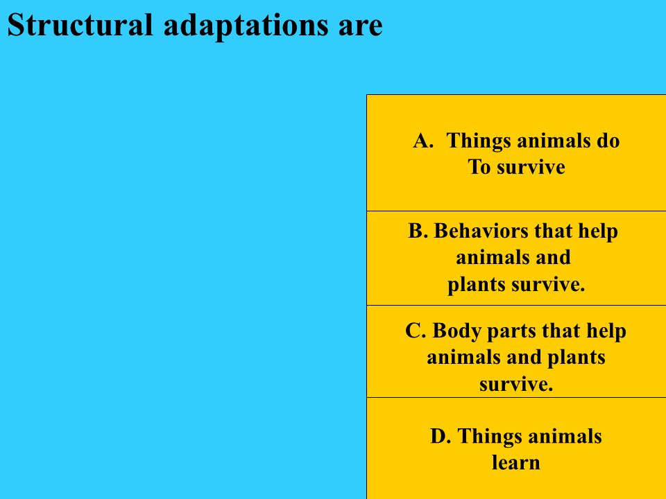 Structural adaptations are
