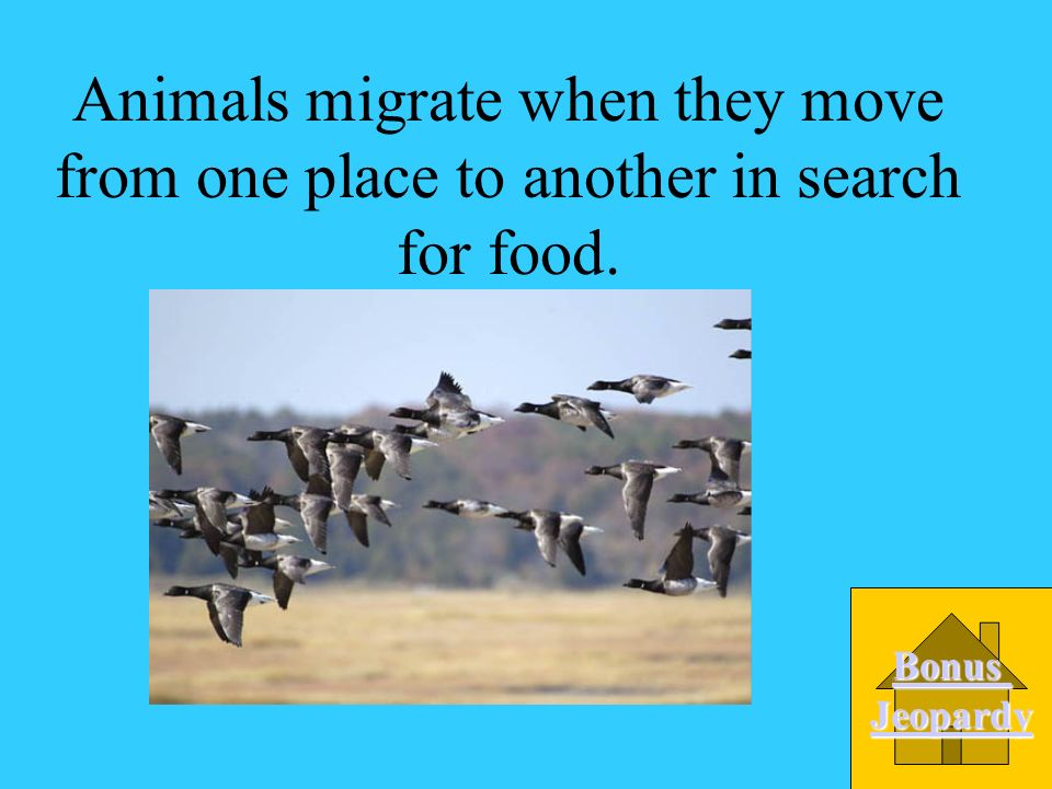 Animals migrate when they move from one place to another in search for food.
